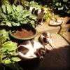 Ik hoef geen dure hondenmand hoor baasje, een plantenbak (speciekuip met zand) ligt veel beter.