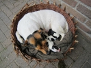Snellie met haar puppies